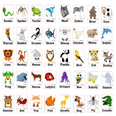 Animals Hayvanlar Manyetik Ingilizce Kelime Kartlari
